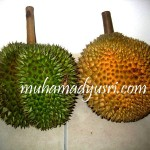Saya Suka Pulut Durian