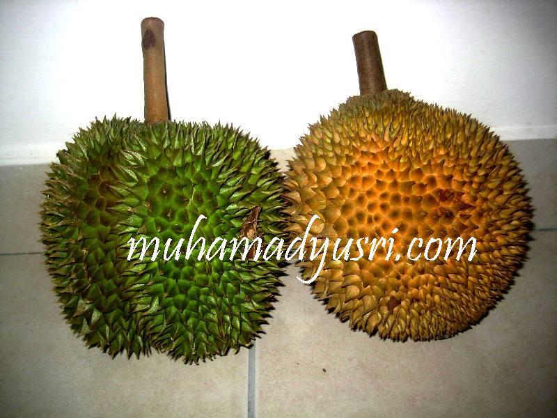 Durian Saya Suka Pulut Durian