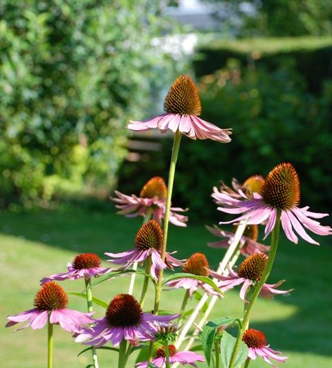 plants DIY Tukar Downlight Pada Hari Merdeka 2012