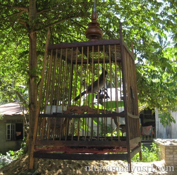 burung candik Wordless Wednesday #17   Burung Candik:Aku Juga Ingin Bebas
