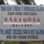 Crocodile Farm Teluk Sengat