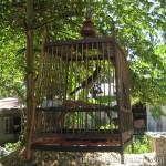 Wordless Wednesday #17 – Burung Candik:Aku Juga Ingin Bebas